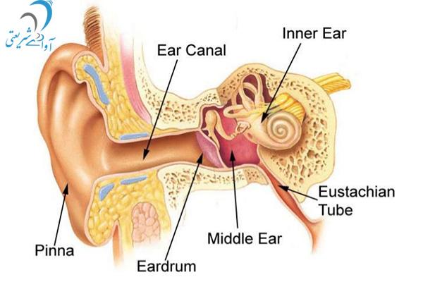 کلیاتی از سیستم شنوایی و کم شنوایی